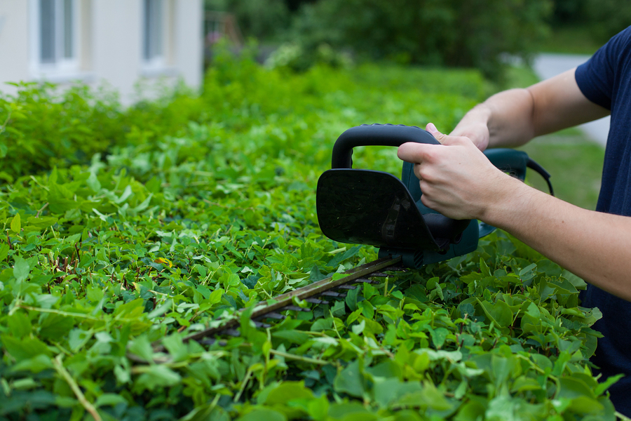 Occasional Garden Maintenance Services For a Beautiful Garden