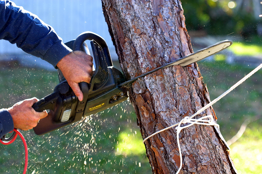 Best Arborists Professionals That You Need For Perfect Tree Care