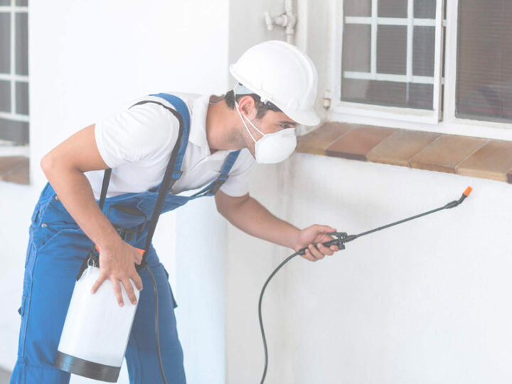 What are the benefits of having the best type of pest service?